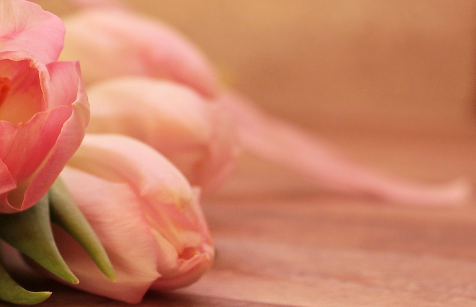 tulips-2068692_1920 1.png