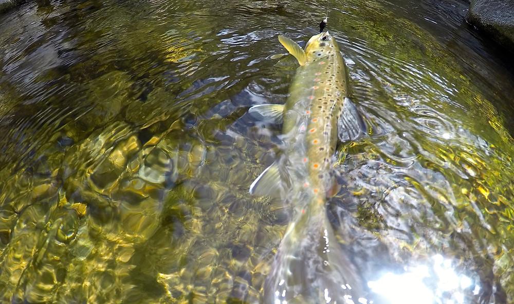 Flyfishing Fischen Schweiz Switzerland