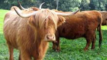 Hochgenuss vom Hasliberger-Bio Hochland Rind