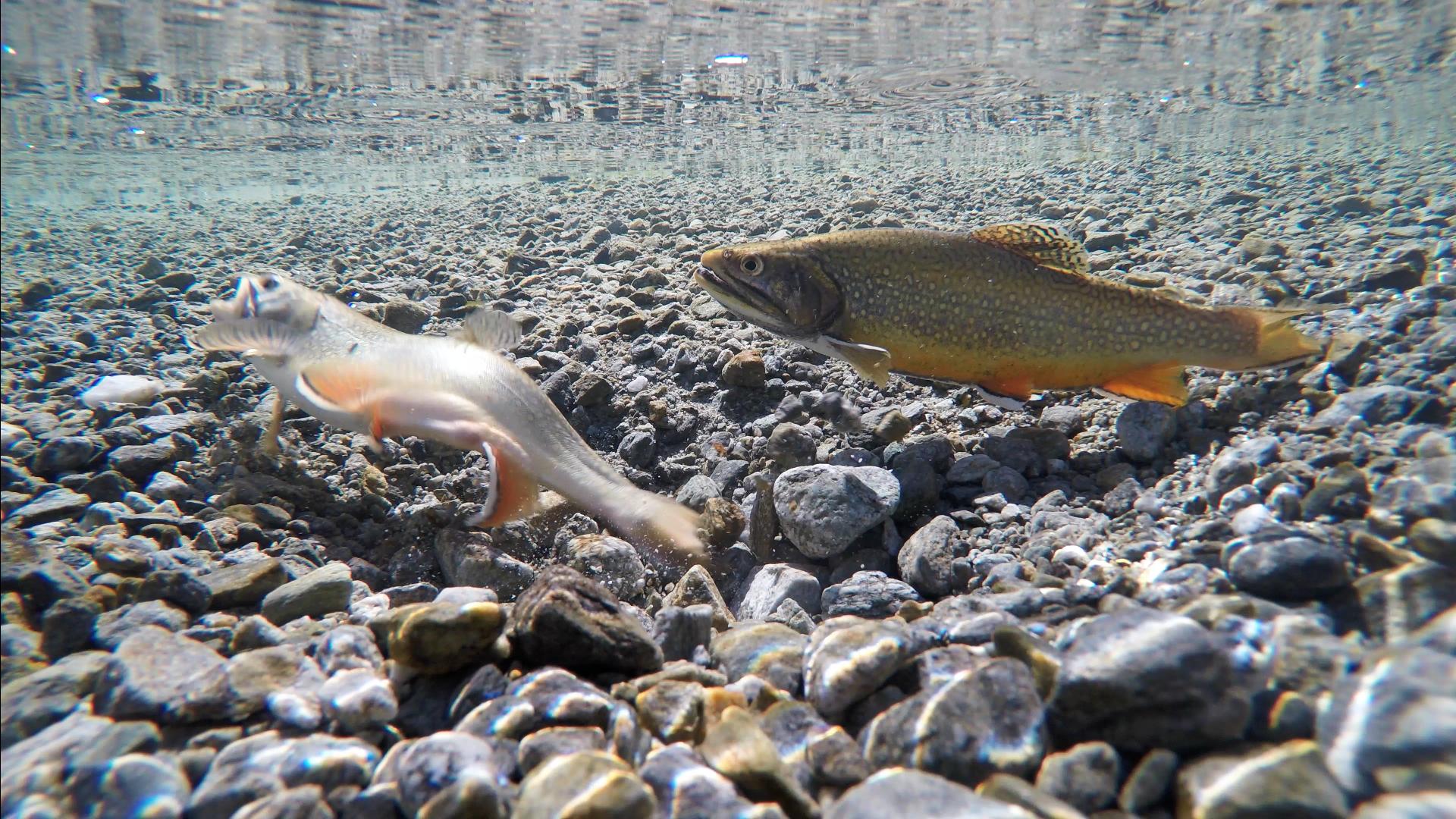 Fischen Berner Oberland Schweiz