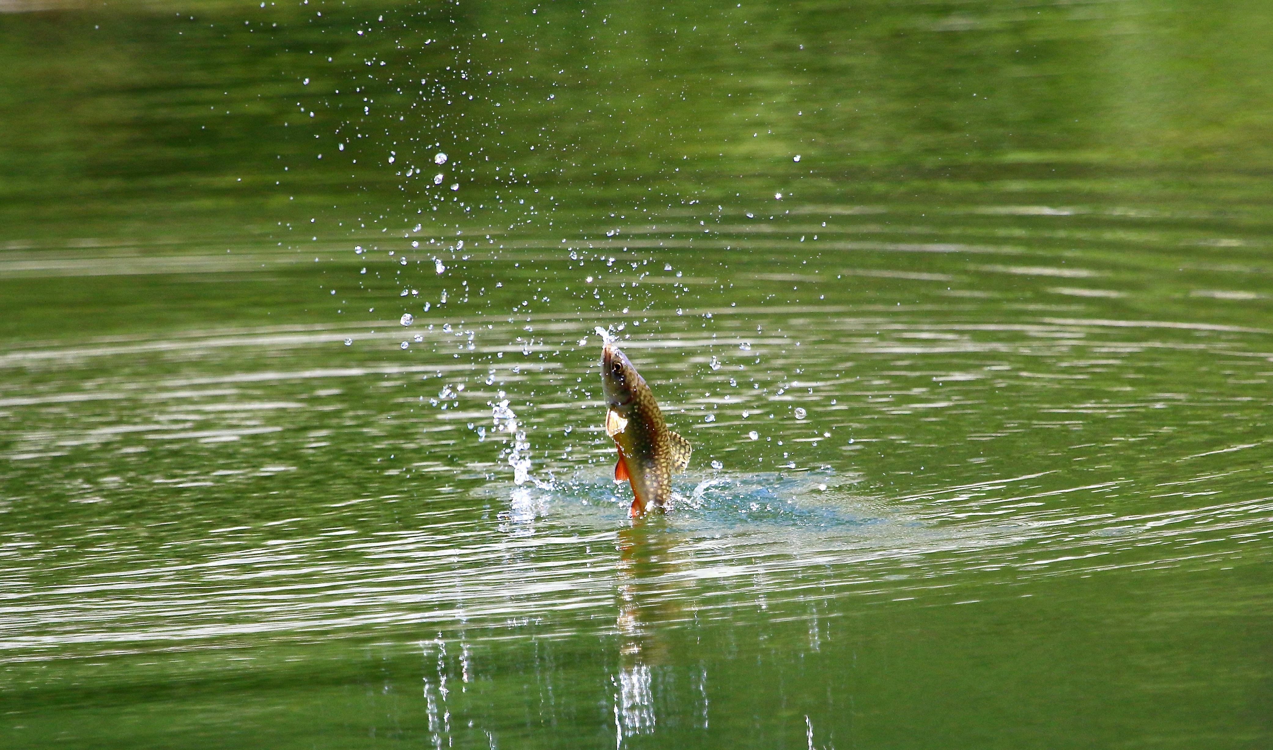 Fischen Fliegenfischen Schweiz