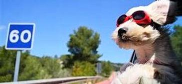 犬 ドライブ 2.jpg