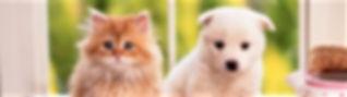 犬と猫2.jpg
