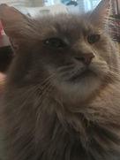 Farrah cat 2.JPG