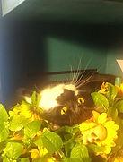 Farrah cat 3.JPG