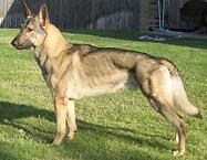 Farrah Dog.PNG
