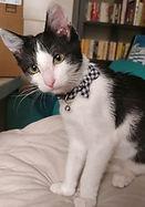 Farrah cat 1.JPG