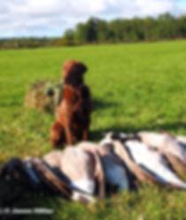 dog, hound, bird dog, hunt, hunting dog, ontario, canada, association, hunter, dog hunter, hunter rights