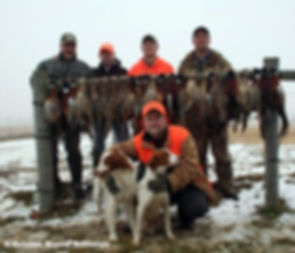 dog, hound, bird dog, hunt, hunting dog, ontario, canada, association, hunter, dog hunter, hunter rights