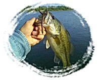 Largemouth sm.jpg