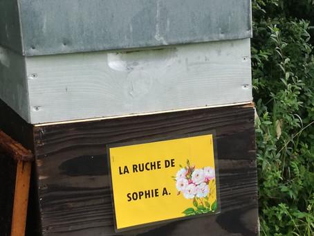 La ruche de Sophie A.