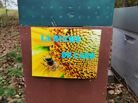 Caroline et les abeilles