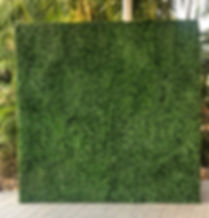 Brisbane Green Wall Photo Backdrop