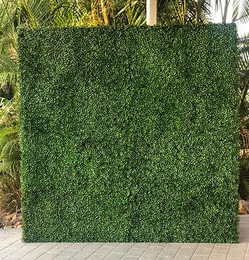 Brisbane Green Wall Photo Backdrop
