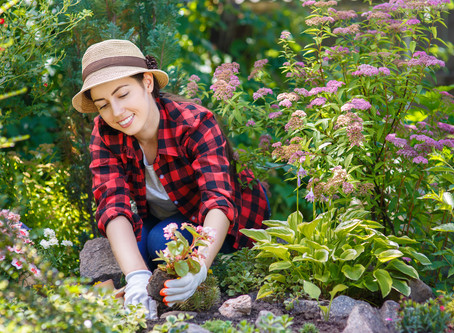 How to Avoid Back Pain While Gardening