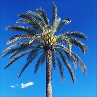 palm%20tree_edited.jpg