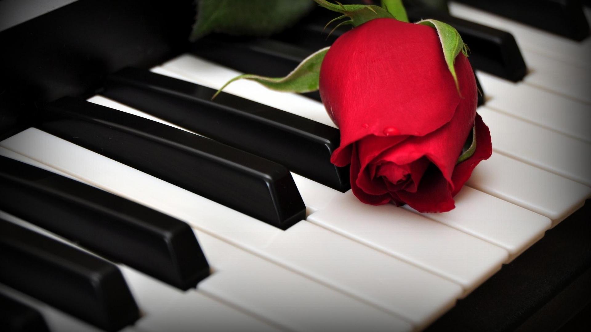 rose_flower_keys_piano_68785_1920x1080