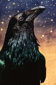 Starry-Eyed Raven
