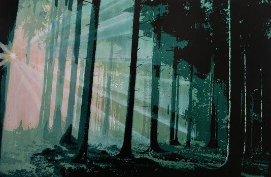 Misted Wood