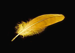 Golden Feather.jpg
