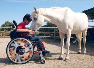 La terapia con caballos mejora algunos síntomas de la esclerosis múltiple