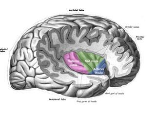 Disfunción eréctil en la esclerosis múltiple: esta lesión en el cerebro es la responsable