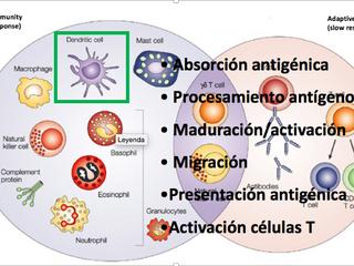 Terapia celular en Esclerosis Múltiple