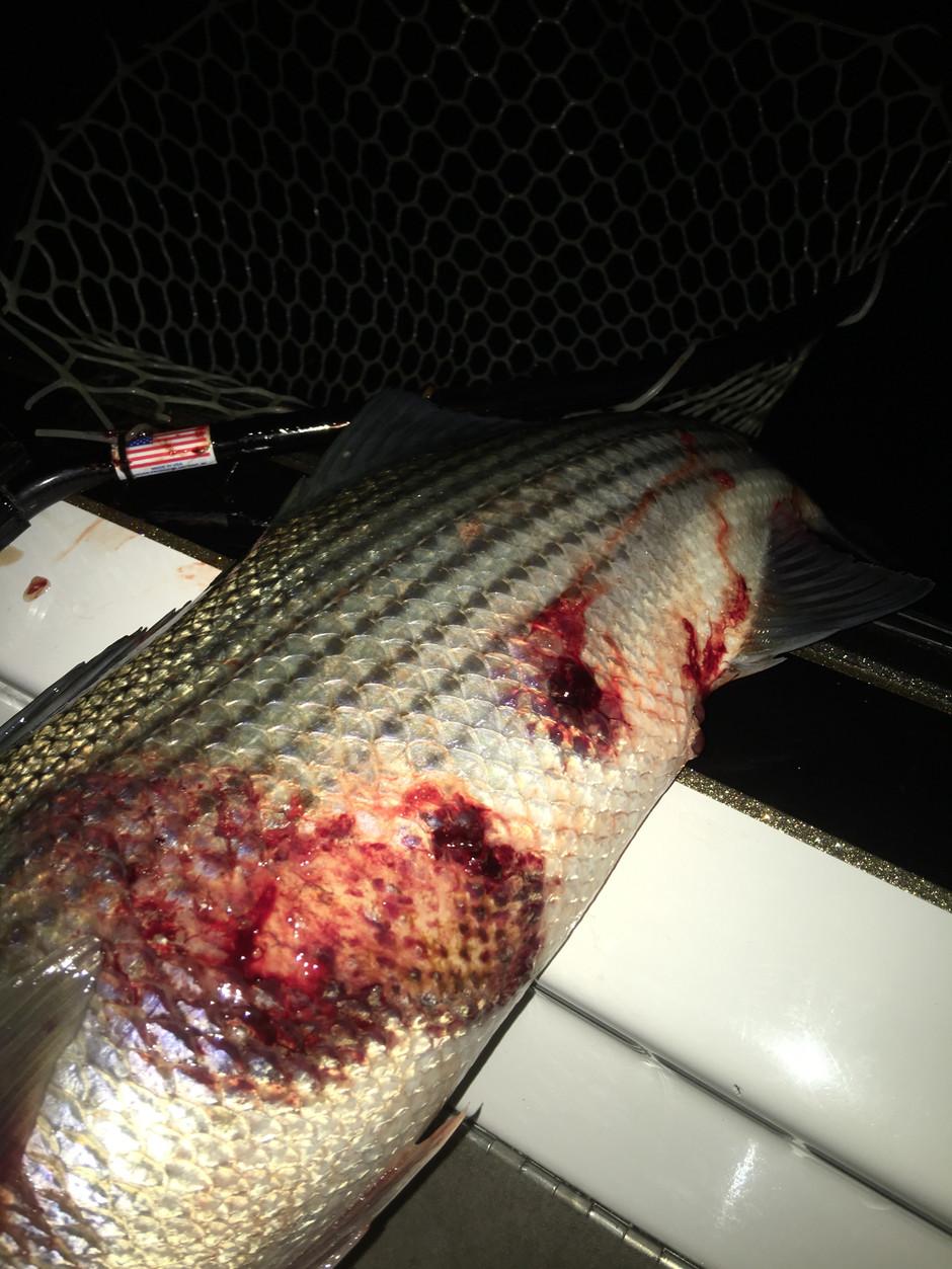 Zombie Bass!... no really
