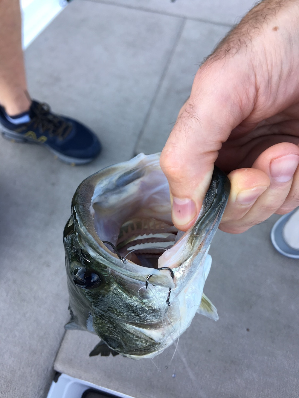 Lake Travis Fishing Guide- fish with BOTH hooks in its mouth