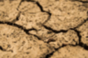 aridity-brown-drought-36016.jpg