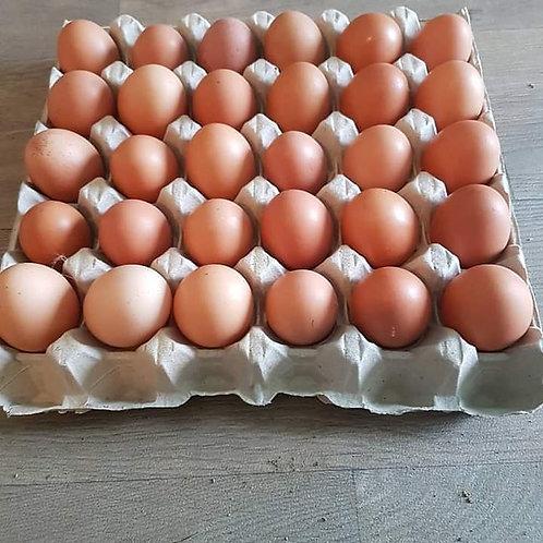 Tray of 30 eggs