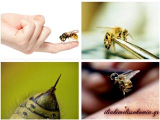 To δηλητήριο της μέλισσας !!
