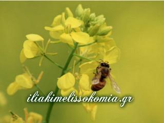 Ο χορός των μελισσών