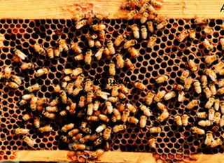 Μέλι και Μελισσοθεραπεία