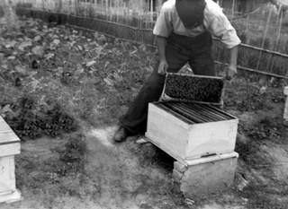 Μελισσοκομικά προϊόντα απο το 1936