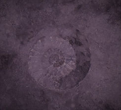 fossil spiral edit.jpg