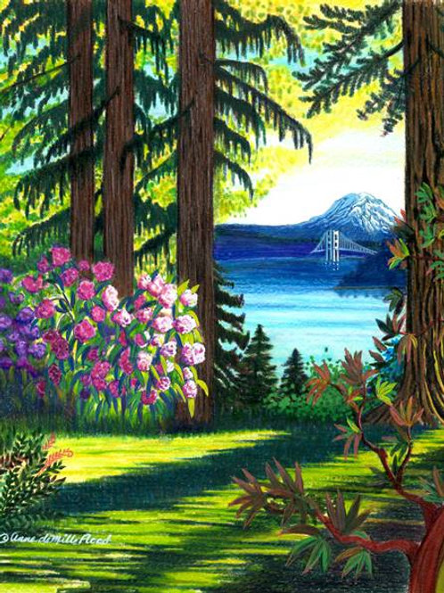 """Old Growth at Point Defiance 11x14"""" matted print"""
