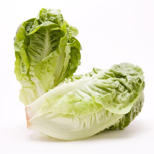 Salát Little Gem 2ks