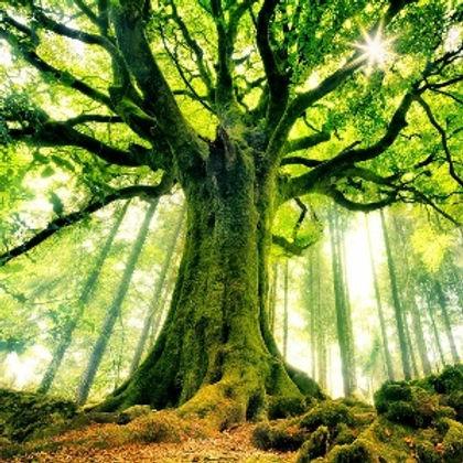 Arbre-nature1.jpg