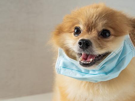 Νέος κορωνοϊός σε σκύλους με πιθανότητα μετάδοσης και σε ανθρώπους.