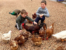 Children feeding Chickens at Pegs Place.  Port Victoria. Farmstay by the Beach. Pegs Place. Yorke Peninsula. South Australia. Yorke Peninsula Accomodation.