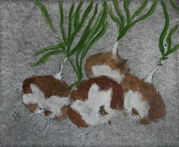 Mellin Onions dry pt.jpg