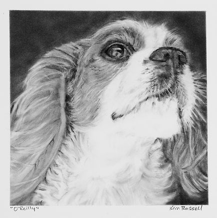 OReilly graphite on paper 8x8 inches Kim