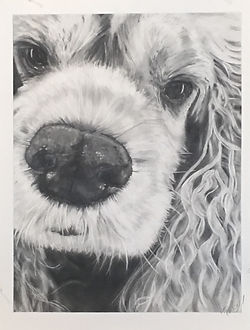 Chloe graphite on paper 18 x 24 inches K