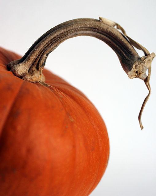 Pumpkin.JPG.jpg