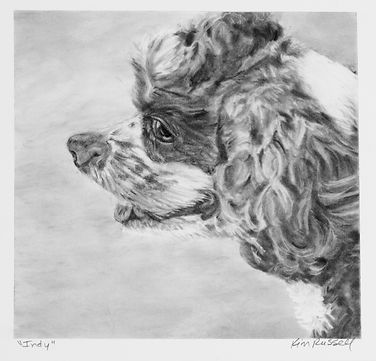 Indy Graphite on Paper 18x18 inches - Ki