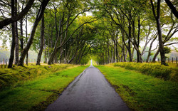 ws_Beautiful_Trees_Alley_Way_Gras_1920x1200