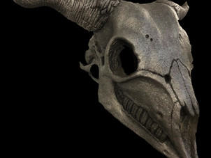 Animal Skull Goat Profile