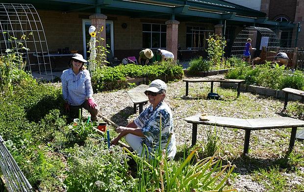 Volunteers In The Cortez Garden 2017