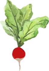 radish copy adjust.png
